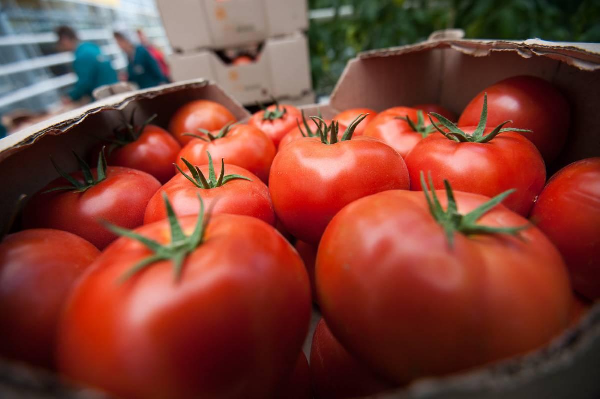 Картинки по запросу Турецкие помидоры находятся в России
